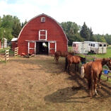 Horse Boarding, Training, Lessons Etc