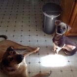 service de garde pour animaux