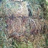 A mix of First and Second Cut Hay