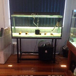 **4ft fish tank setup** Wingham Greater Taree Area Preview