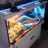 Awesome custom designed 4ft tank! Currajong Townsville City Preview