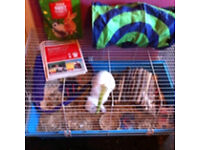 Rabbit or Guinea pig cage