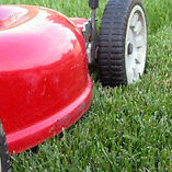 Need Lawn mowed in Bow island?