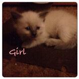 4 adorable kittens need good homes.