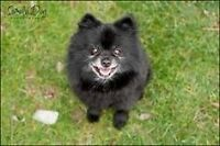 Small size older and or disabled dog