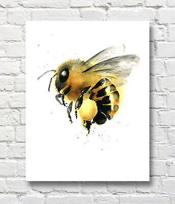 Honey Bee Watercolor Painting Honey Bee Art Print by Artist DJR