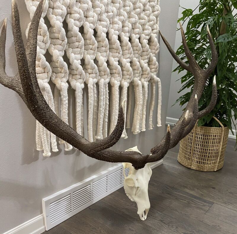 $2100 Red Deer Stag~Reproduction Skull Antler European Taxidermy WALL DECOR~