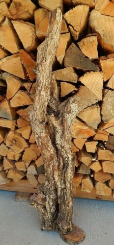 """Hawthorn (Thorn Apple) Wood Two Crooked Natural Tree Branch Trunk 6 1/2""""D 37""""L"""