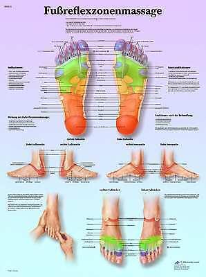 Fußreflexzonenmassage Lehrtafel  Anatomie 50 x 67cm Poster