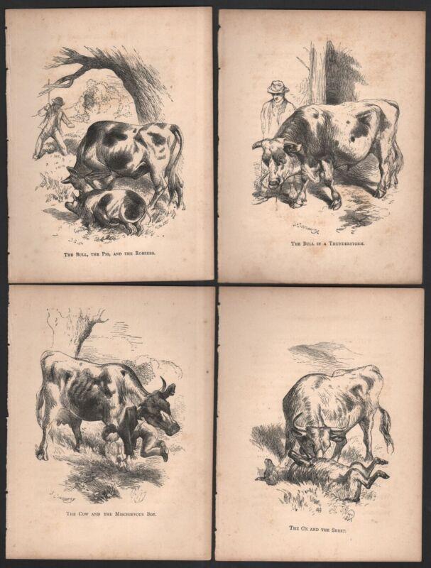 4 Original Weir Bull Cattle FarmThemed  Childrens Prints c1880 5