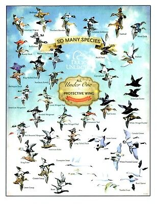 Ducks Unlimited DU Wetland Bird Game Hunting Decoy Wall Metal Tin Ad Sign Gift