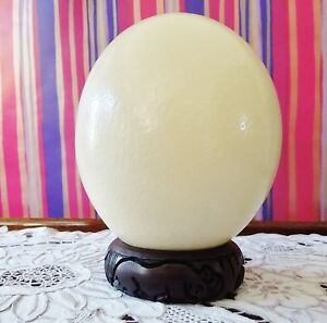 Genuine Grade A Quality Ostrich Egg Blown natural home decor florist supplies