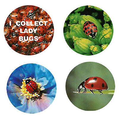 Ladybug Magnets : 4 Cool Ladybugs for your Fridge or Collection-A Great Gift