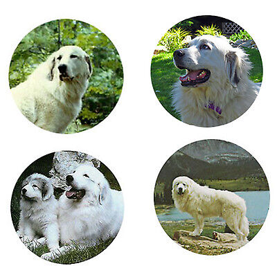 Great Pyrenees Magnets:4 Great Pyrenees 4 your Fridge or Collection-A Great Gift