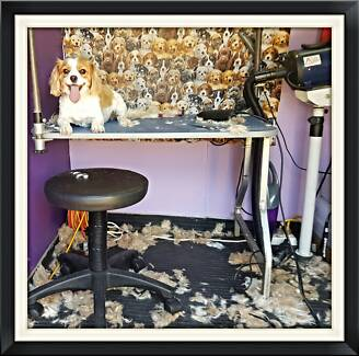 Ministry of hound grooming grooming gumtree australia gold iwashdogs elanora add to watchlist dog grooming pacific pines gold coast solutioingenieria Choice Image