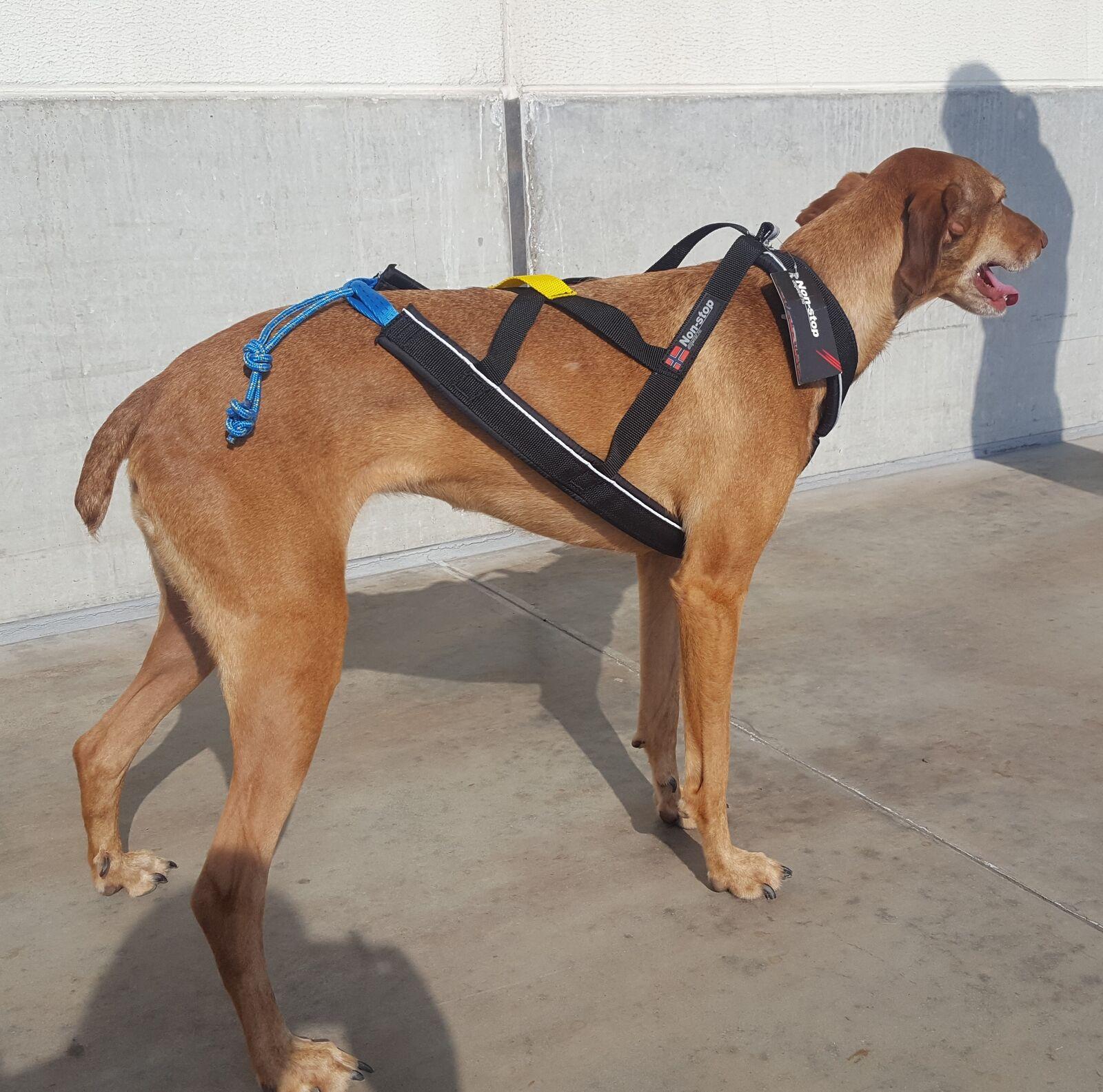 Non-Stop Nansen Nome Harness Hundegeschirr Zuggeschirr für Zughundesport Dogscoo