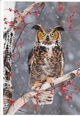 Ansichtskarte: Virginia - Uhu  - Bubo virginianus - great horned owl