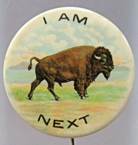 "BUFFALO I AM NEXT 1901 Pan American Expo 1.75"" pinback button BISON ^"