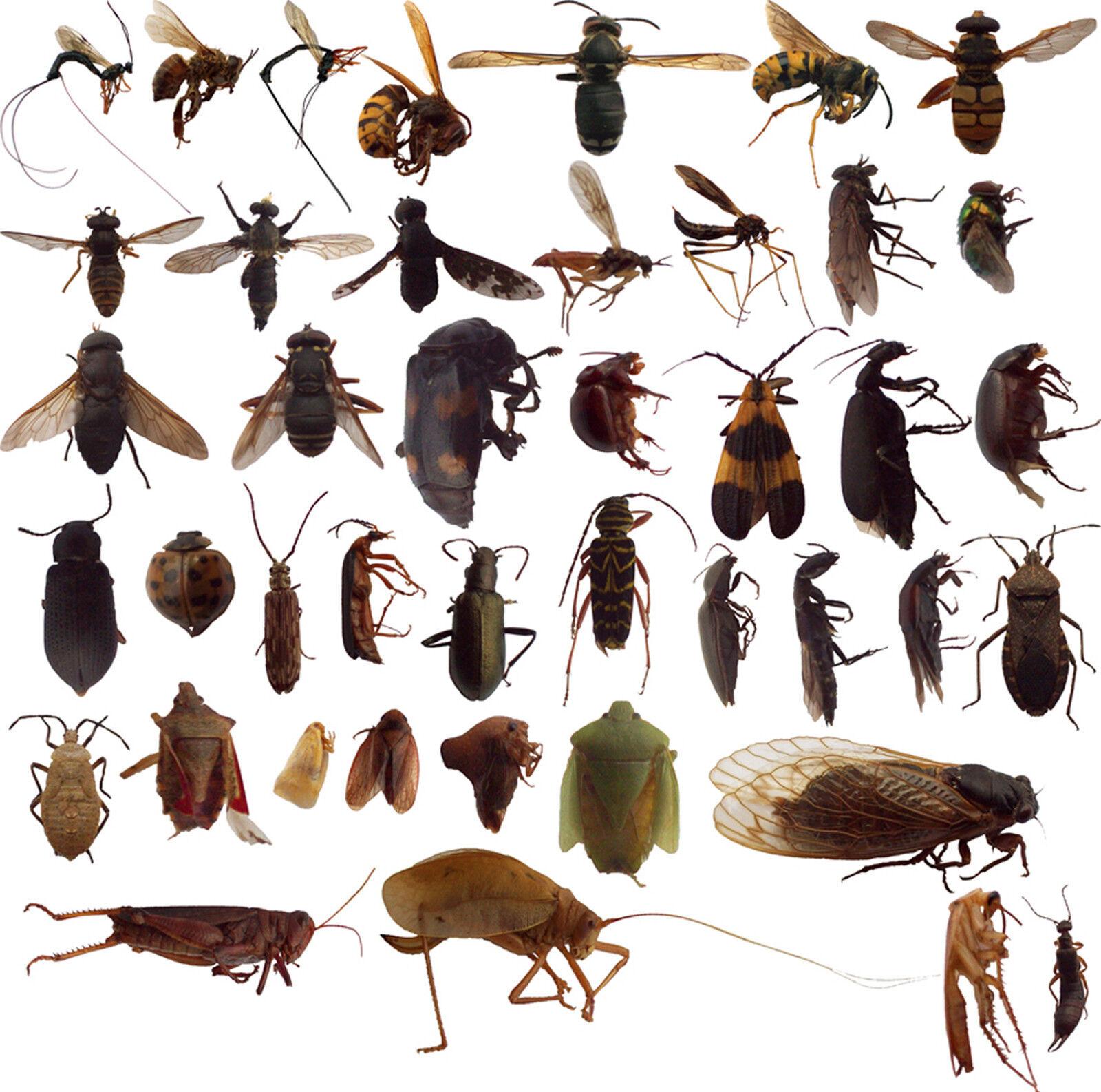 картинки много насекомых на одном листе например, его