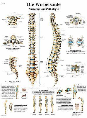menschliche Wirbelsäule  Lehrtafel  Anatomie 50 x 67cm Poster