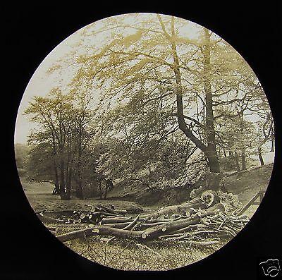 Glass Magic Lantern Slide A WOODLAND SCENE C1890 TREES FORESTRY