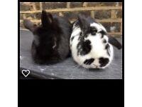 Two Gorgeous Rabbits & A Big Hutch