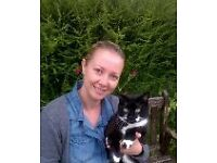 Dog walking and cat & small pet sitting/feeding services in Canterbury , Kent and surrounding areas