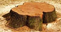 Tree Stump Removal Service Best Prices around