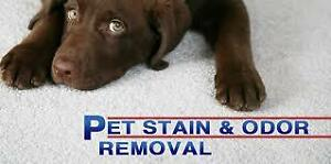 METRO LONDON CARPET CLEANING--Your 1-Stop Shop for cleaning!. London Ontario image 4