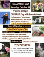 50% sold out Halloween Farm Day!