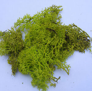Light Green Reindeer Moss Dolls House Miniature Garden Flower Foliage Accessory