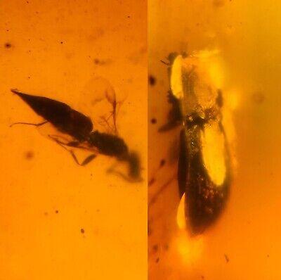 4.1g Beetle&wasp Bee Burmite Myanmar Burmese Amber insect fossil dinosaur age