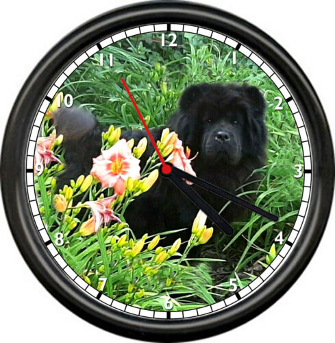 Black Chow Chow Amazing Dog Breed Man