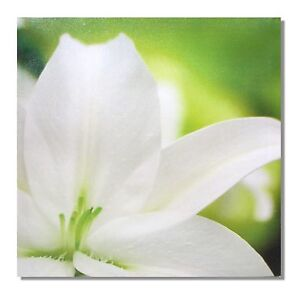 Flower White Lilly Green Petal Canvas Print Wall Art Ornament