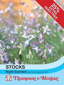 Thompson & Morgan - Flowers - Stocks Night Scented  - 1100 Seed