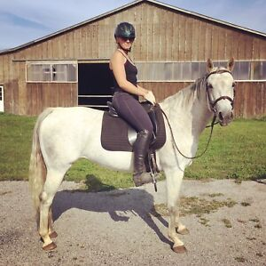 16 y/o Quarter Horse Mare for sale