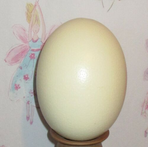 Genuine OSTRICH EGG Large Blown Out Empty Clean Single Hole DECORATE ART CRAFTS