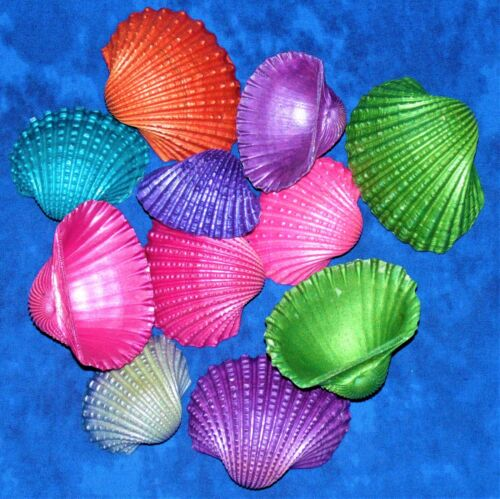 """1/2 POUND OF 2 to 3"""" DYED ARK SEA SHELLS, BEACH DECOR CRAFT TROPICAL"""
