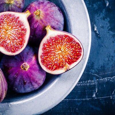 Violette Du Bordeaux Fig Ficus Carica Live Plant Negronne Petite Figue De Violet