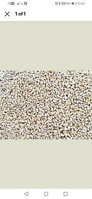 Wheat - Pigeon, Poultry, Chicken, Waterfowl, Animal Feed 2kg packs