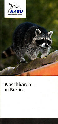 DER WASCHB R IN BERLIN WILDTIERE IN BERLIN WASCHB REN IN BERLIN RACCOON
