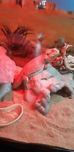 Bearded Dragon + Aquarium and accessories for sale