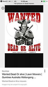 Dead all alive mower Kellyville The Hills District Preview