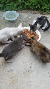 Free Kittens Durack Brisbane South West Preview