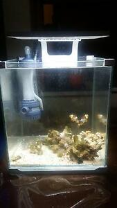 MARINE Desktop Tank With Clownfish for SALE!!!! Westmead Parramatta Area Preview