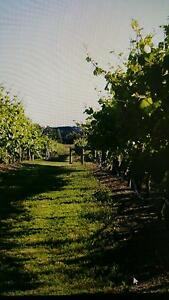 Boutique Winery for Lease Baxter Mornington Peninsula Preview