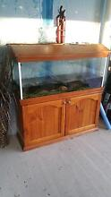 cheap 4ft fish tank with all accessories Hinchinbrook Liverpool Area Preview