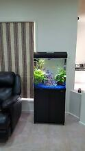 Fish Tank & Cuboard/Stand (Aqua Style 620T) Mawson Lakes Salisbury Area Preview
