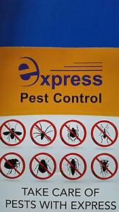 Express Pest Control Casula Liverpool Area Preview