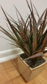 Fake plant 30cm high - Commercial Grade Clontarf Redcliffe Area Preview